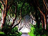 Vignette chemin dans la forêt