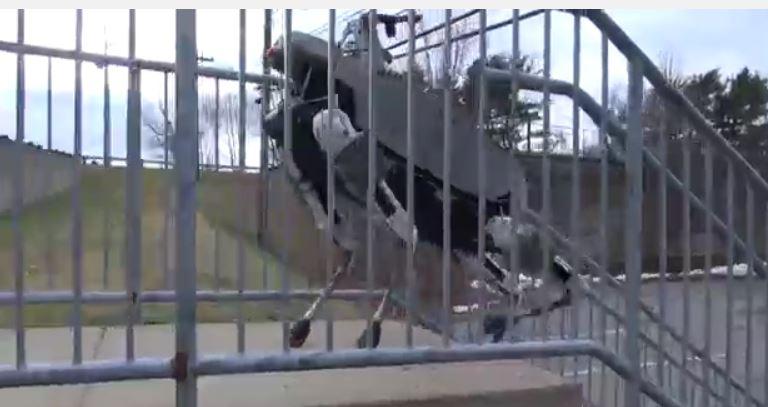 Wildcat climbing stairs